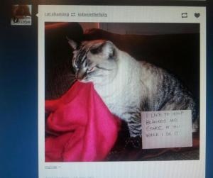 My cat shows up in weird places online.